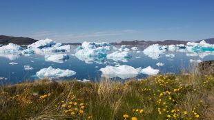 Dobroczynne działanie topnienia lodowców. Ale nie dla ludzi, lecz planktonu