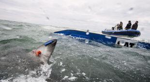 Badacze śledzą żarłacze białe dzięki nadajnikom satelitarnym